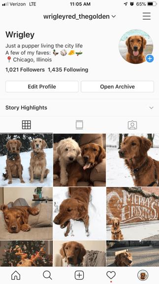 Dog instagram social media app example