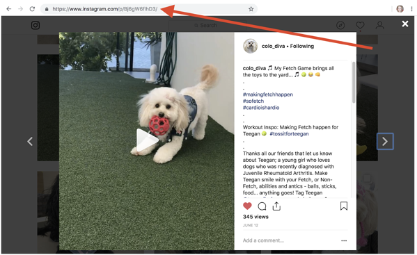 how-to-download-videos-from-instagram