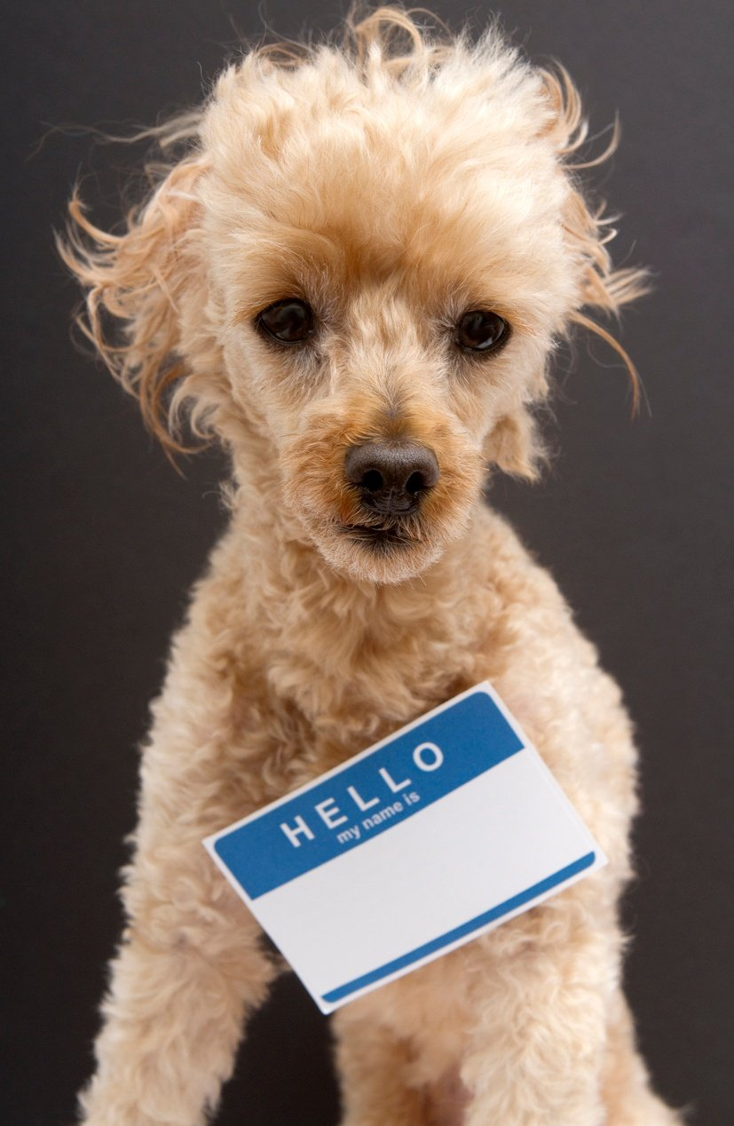 cute-funny-name-badge